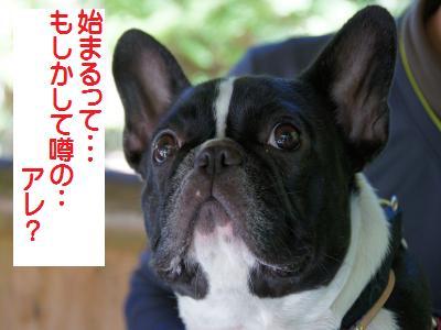 37_20101019094118.jpg