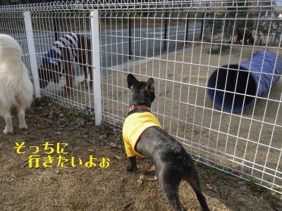 4_20110112223820.jpg