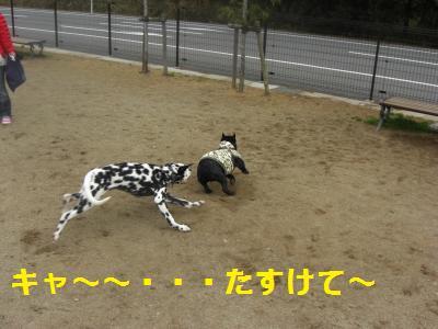 7_20100408004457.jpg