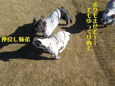 7_20101217164409.jpg