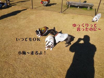 8_20101217164409.jpg