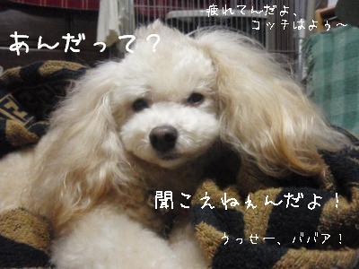 20100328-4.jpg