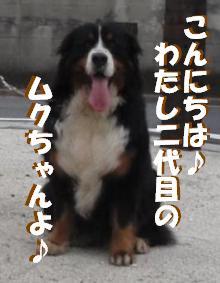 20100608-muku1.jpg
