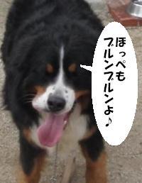 20100608-muku2.jpg