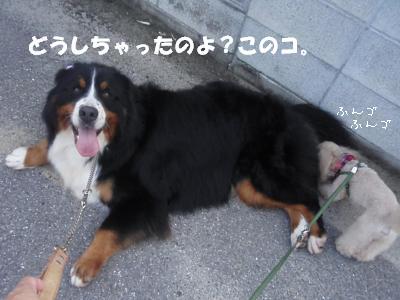20100625-11-2.jpg