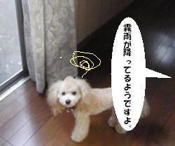 20100704-2.jpg