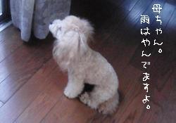 20100704-3.jpg