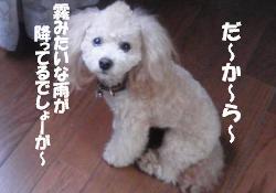 20100704-4.jpg