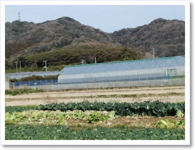 20120129いちご狩り3