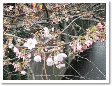 20120331目黒川