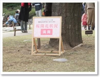 20120407お花見