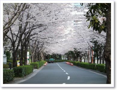20120408散歩1