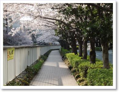 20120408散歩3