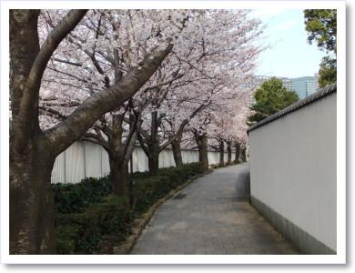 20120408散歩