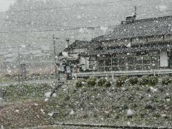 20101230初雪~♪4
