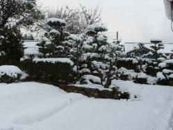 20110125雪~~♪