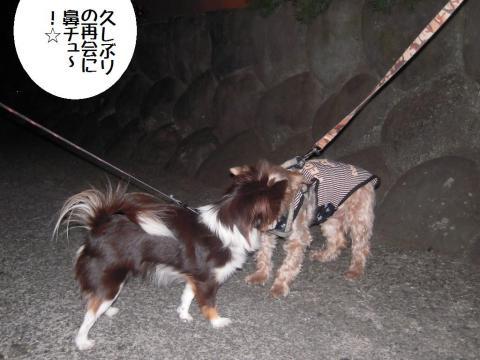 DSCN0098   夜散歩