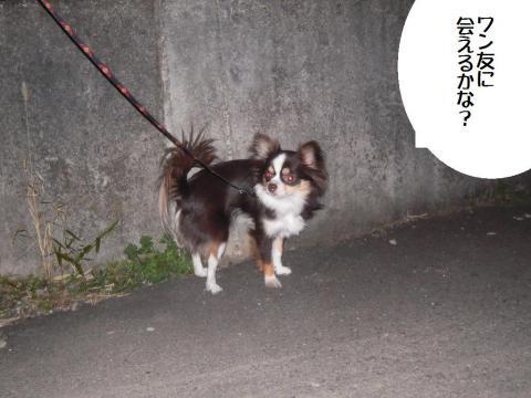 DSCN0096   夜散歩