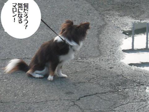 DSCN9882   散歩2・6