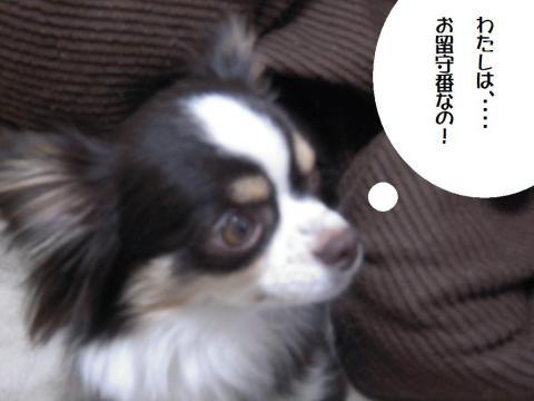 DSCN0036 千枚田