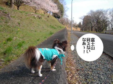 DSCN9976   桜