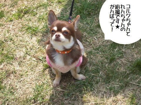 DSCN0026   平塚