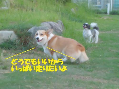 001_convert_20130825225006.jpg