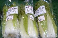 タケノコ白菜♪