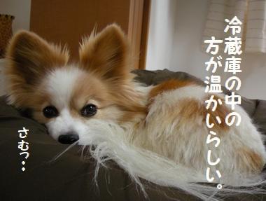 001_20100108151047.jpg