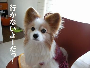 001_20100118184135.jpg