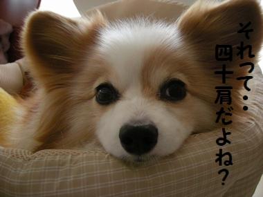 002_20101219173132.jpg
