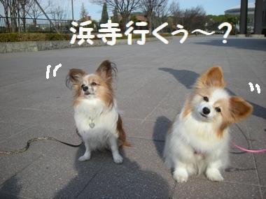 0040_20110108183530.jpg