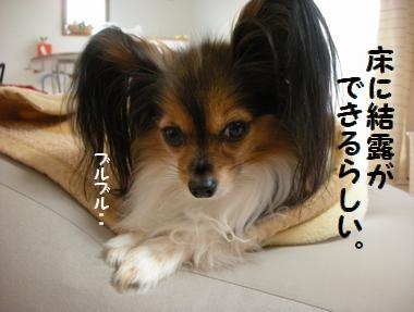 004_20100108151047.jpg