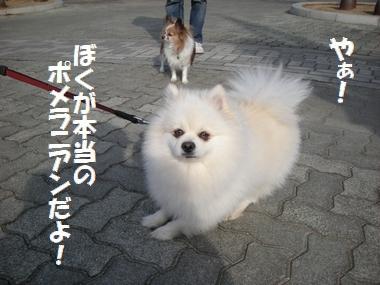 009_20110108183531.jpg