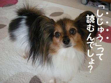 030_20101219200736.jpg