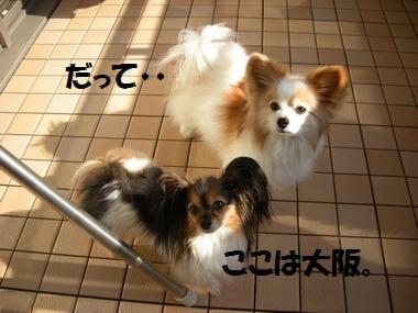 042_20110120151249.jpg