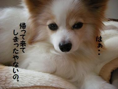 045_20110120154825.jpg