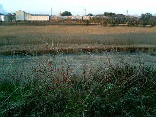 河原の赤いポツポツ