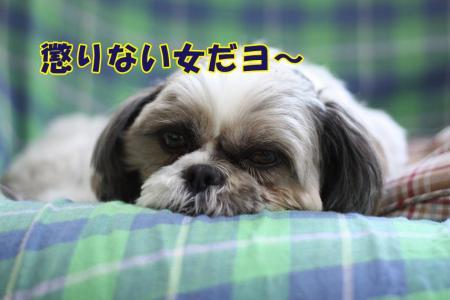 003_20100310184104.jpg