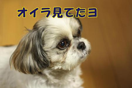 011_20100114213205.jpg