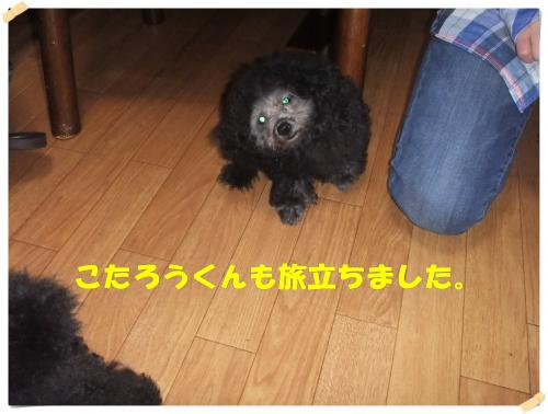 DSCF0495_convert_20130327112503.jpg
