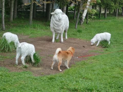 岩見沢PA羊