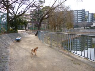 池の周辺お散歩