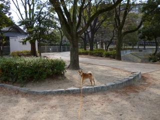よく遊んだ公園