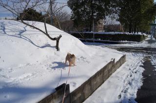 積雪15センチ