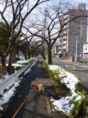 残雪あり。