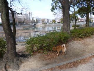 池の傍散歩