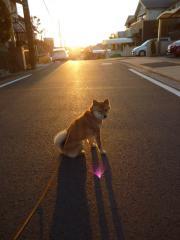 夕陽に逆光