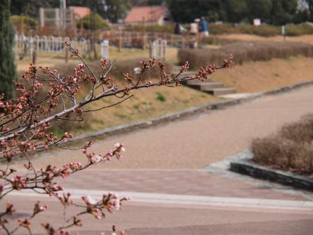 春近しの服部緑地