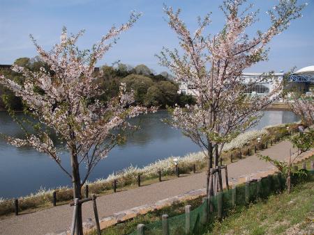 桜も咲いてた♪